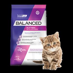 Balance Gato Kitten por 2 y 7,5 Kg